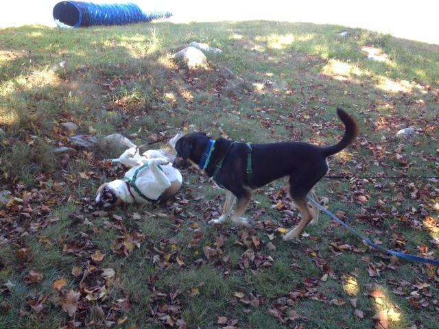 Echo and Jasper 091515a
