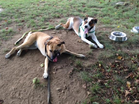 Jasper and Hera 8-17-15 c