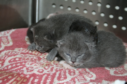 blossoms kittens 050716c
