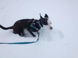 blizzard-aggie