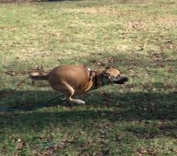 running-hera-1