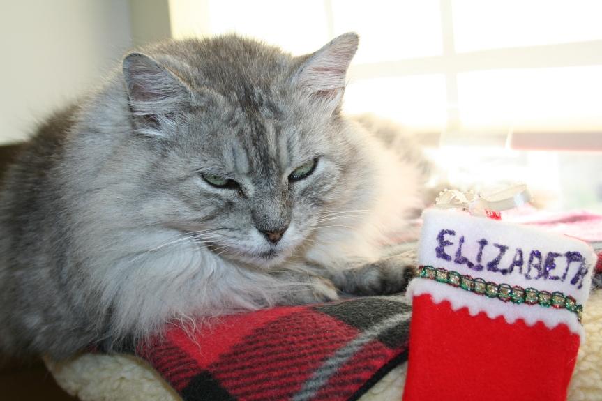 elizabeth-120216a