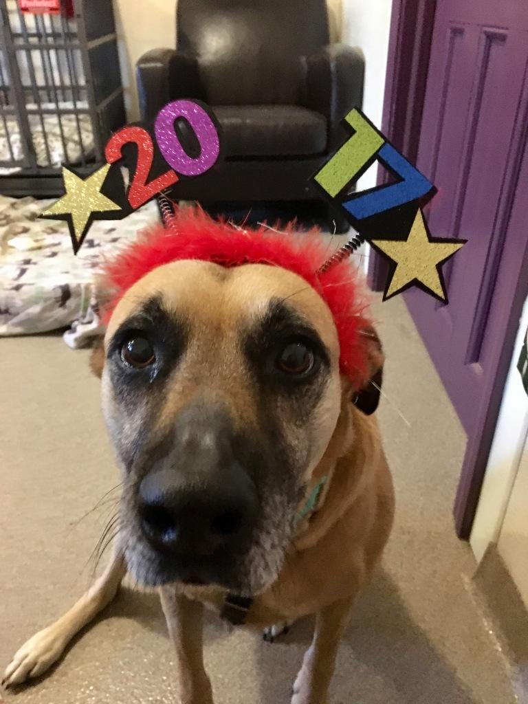 hera-new-year-2017