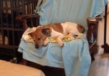 sleeping-romeo