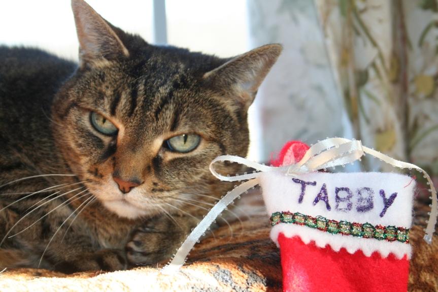 tabby-120216b