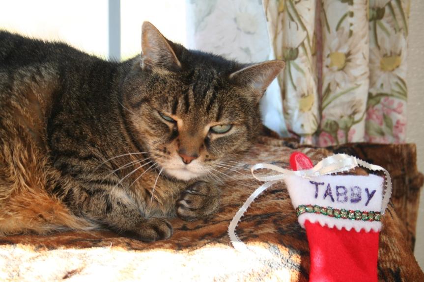 tabby-120216c