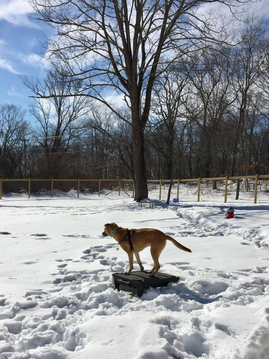 hera-snow02182017a