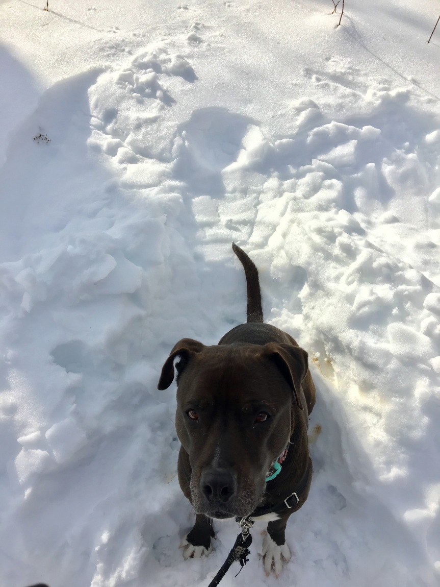 lucy-snow-angel-021517