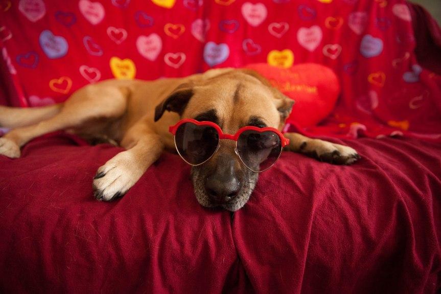 Valentine Hera 02072014c.jpg