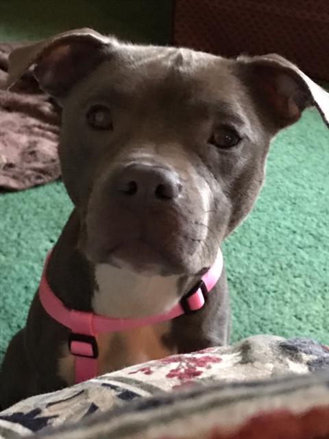 Rosie 011417a