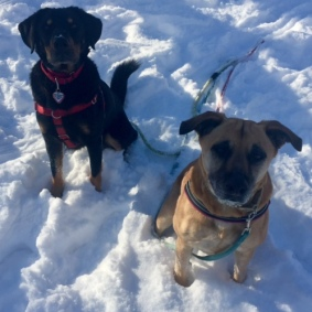 Hera and Brody 010917a