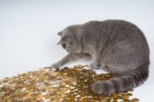 cat counting coins